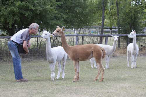 two hour alpaca experience